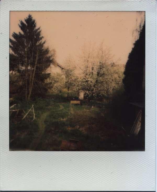 Polaroid Garten