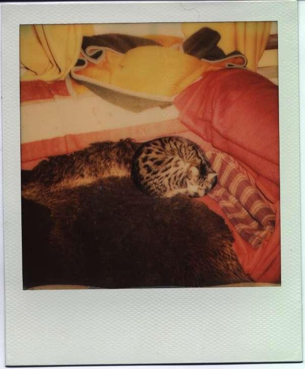 Loki auf dem Sofa